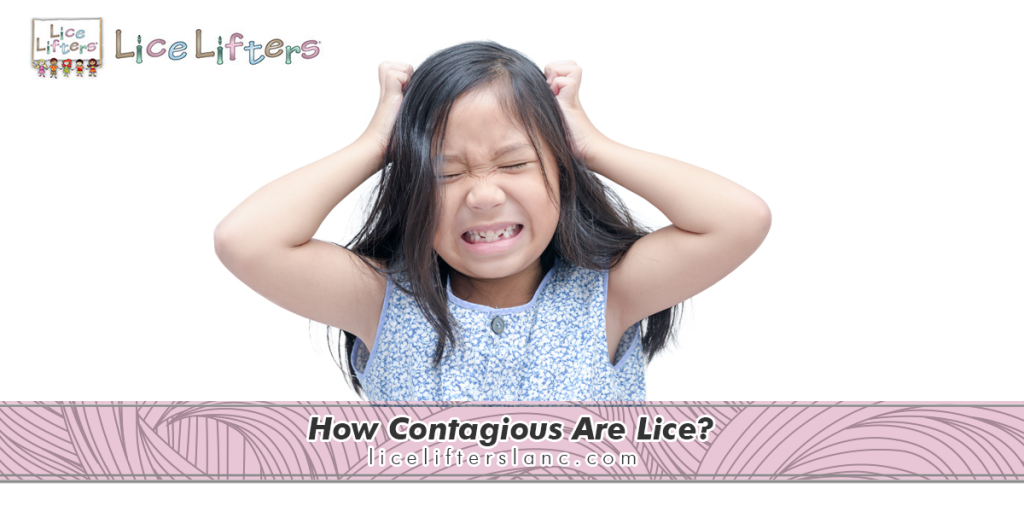 How Contagious Are Lice? 2020